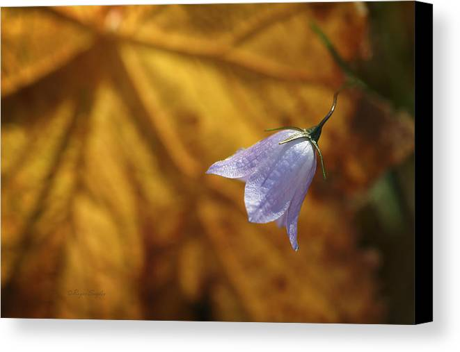 Indigo Canvas Print featuring the photograph Hare Bell And Gold Leaf by Roger Snyder