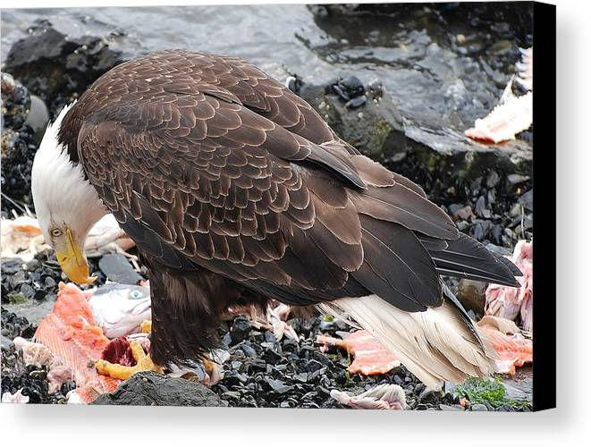 Alaska Canvas Print featuring the photograph Here's Looking At You by Barbara Mundt