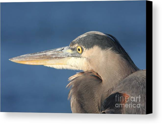 Heron Canvas Print featuring the photograph Heron Close-up by Christiane Schulze Art And Photography