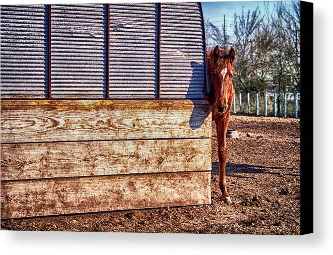 Horse Canvas Print featuring the photograph Hidden Horse by Ian Van Schepen