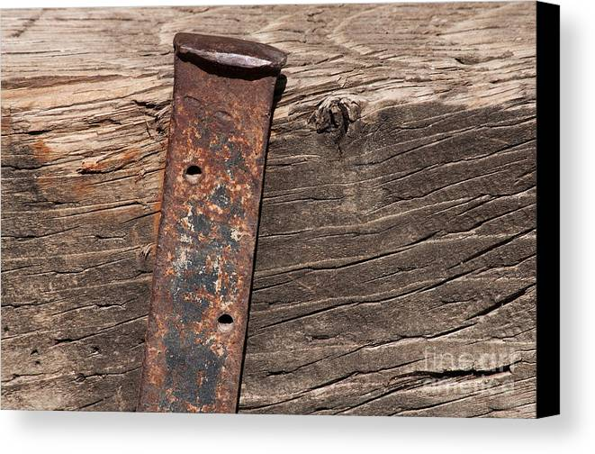 Macro Canvas Print featuring the photograph Holding Up by Dan Holm