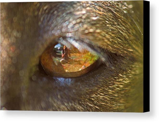 Dogs Canvas Print featuring the photograph In My Dog's Eyes I'm Everything by Peggy Collins