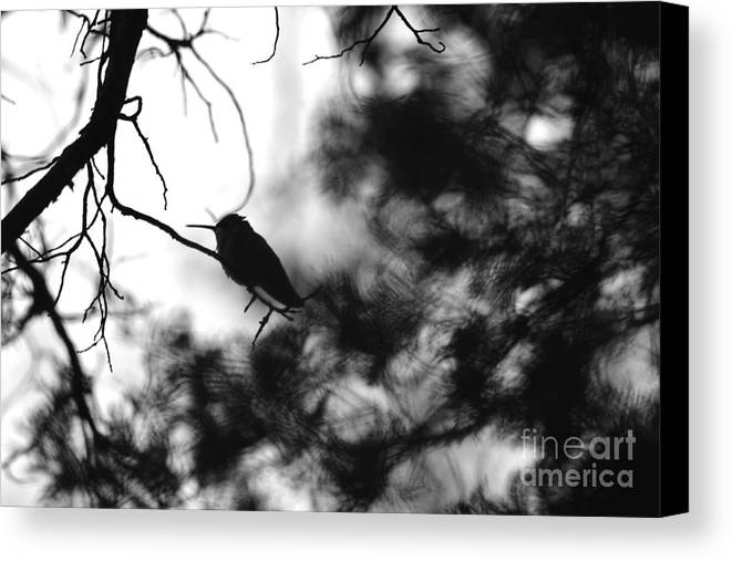 Tiwago Canvas Print featuring the photograph In The Shadows by Photography by Tiwago