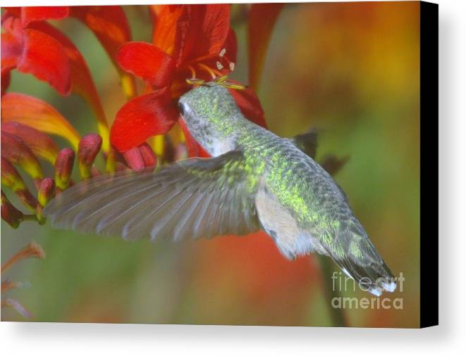 Wings Canvas Print featuring the photograph Indulgence by Jeff Swan