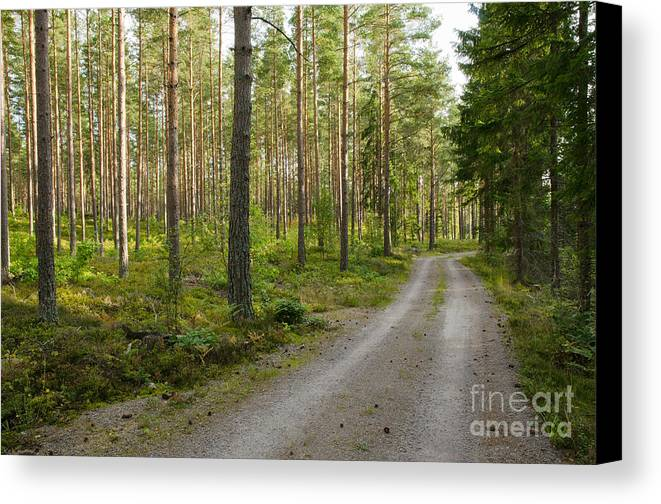 Country Canvas Print featuring the photograph Into The Forest by Kennerth and Birgitta Kullman