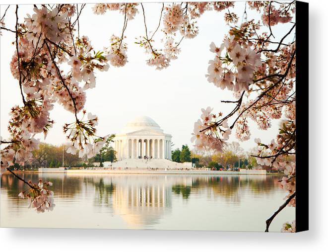 Cherry Canvas Print featuring the photograph Jefferson Memorial With Reflection And Cherry Blossoms by Susan Schmitz