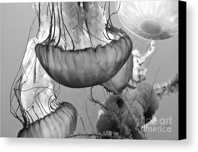 Jelly Fish Canvas Print featuring the photograph Jellyfish Floating By by Artist and Photographer Laura Wrede