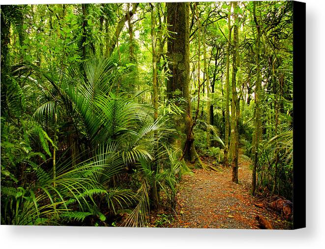 Forest Canvas Print featuring the photograph Jungle Scene by Les Cunliffe