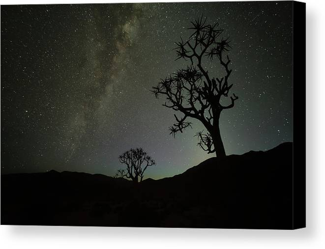 Kookerboom Canvas Print featuring the photograph Kookerboom Tree Under The Milky Way by Robert Postma