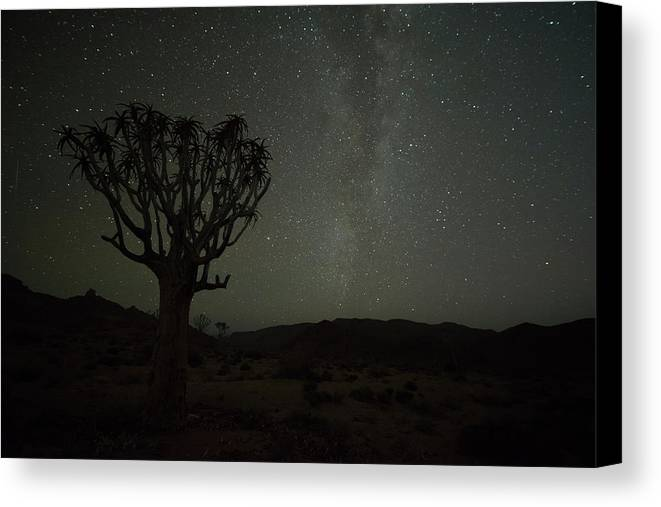 South Africa Canvas Print featuring the photograph Kookerboom Tree With Milky Way by Robert Postma