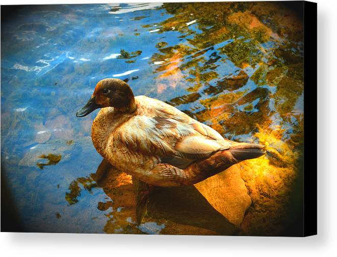 Lake Ducks Canvas Print featuring the photograph Lake Duck Vignette by Stacie Siemsen