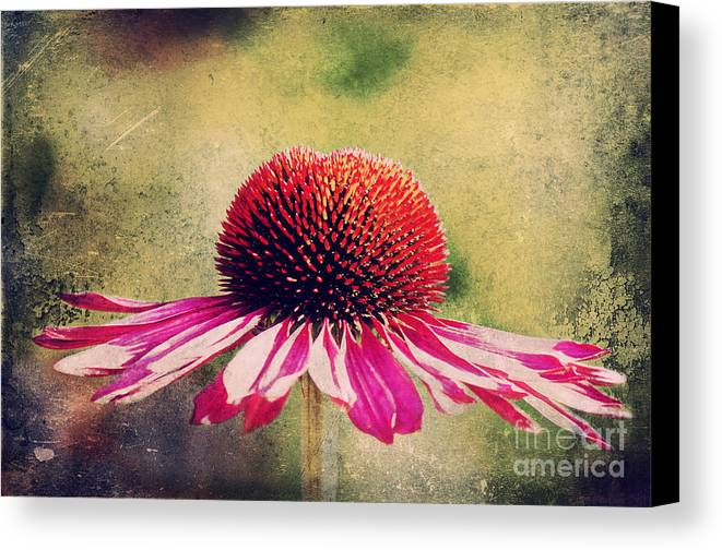 Echinacea Canvas Print featuring the photograph Last Summer Feeling by Angela Doelling AD DESIGN Photo and PhotoArt