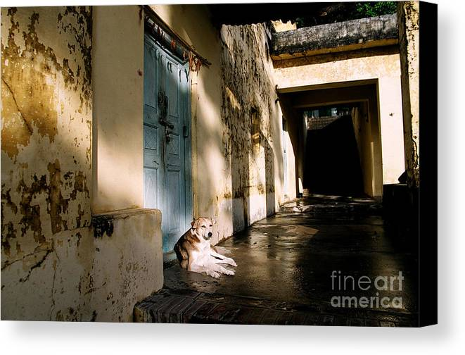 Real Estate Canvas Print featuring the photograph Lazy Dog Resting In The Afternoon by Eldad Carin