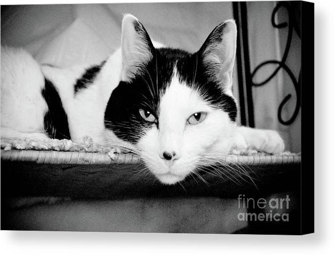 Andee Design Cat Canvas Print featuring the photograph Le Cat by Andee Design