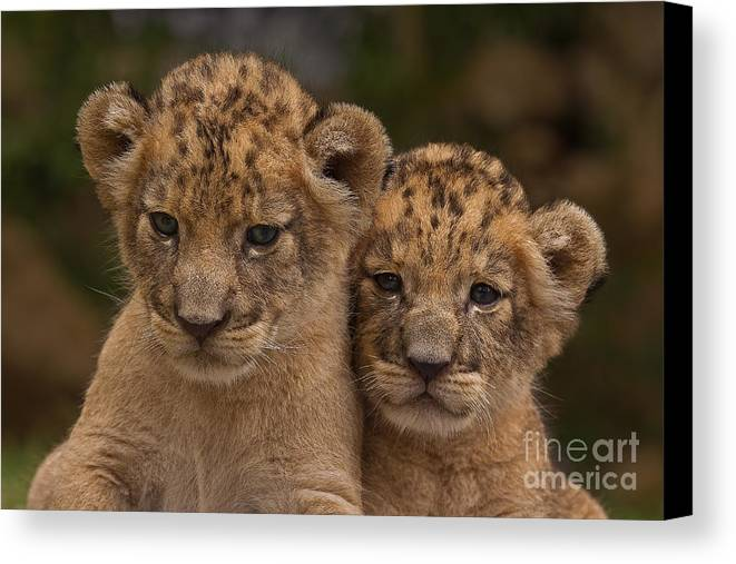 Adorable Canvas Print featuring the photograph Lean On Me by Ashley Vincent