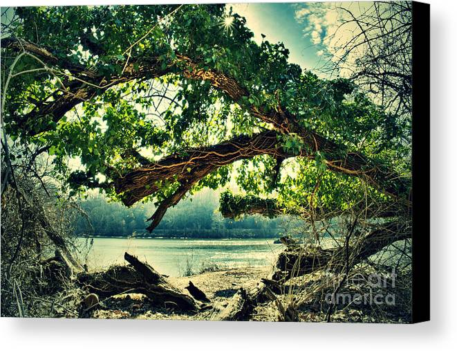 Trees Canvas Print featuring the photograph Life Among Death by Dollaya Piumsuwan