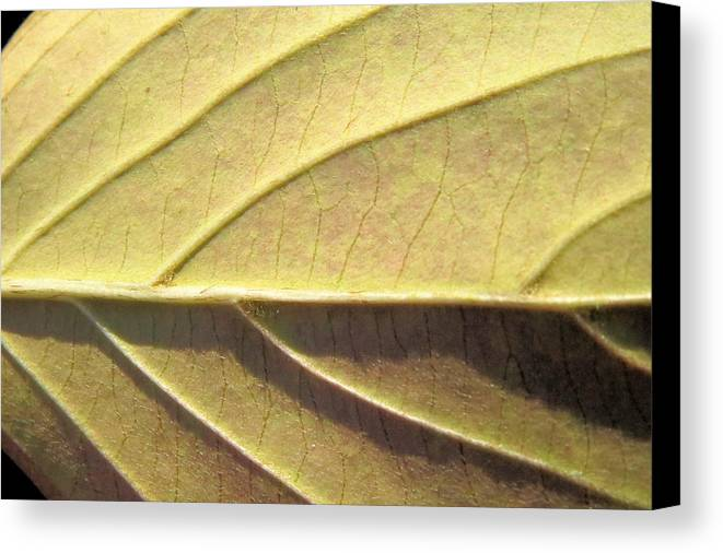 Leaf Nature Veins Leaves Canvas Print featuring the photograph Life's Side Roads by Diane Carlson