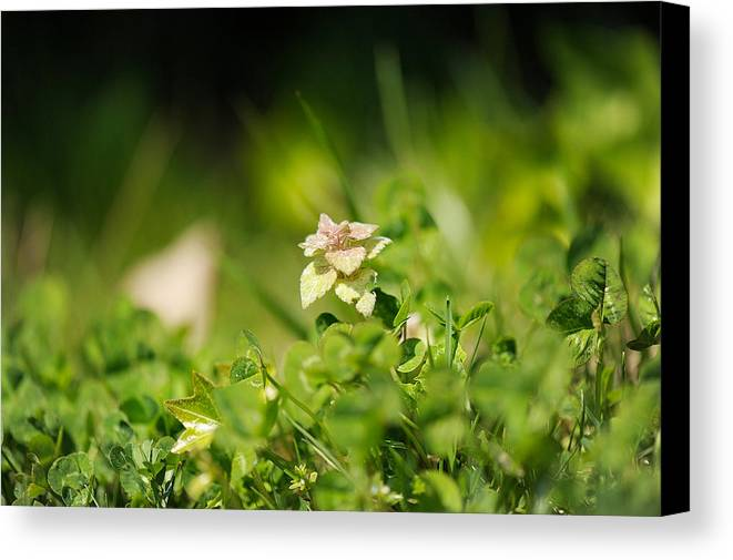 Green Canvas Print featuring the photograph Little Life by Kathryn Blevins