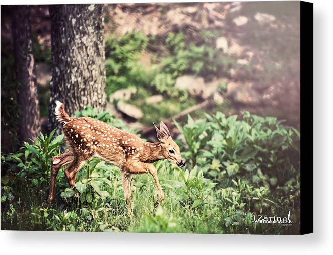 J. Zaring Canvas Print featuring the photograph Little One by Joshua Zaring