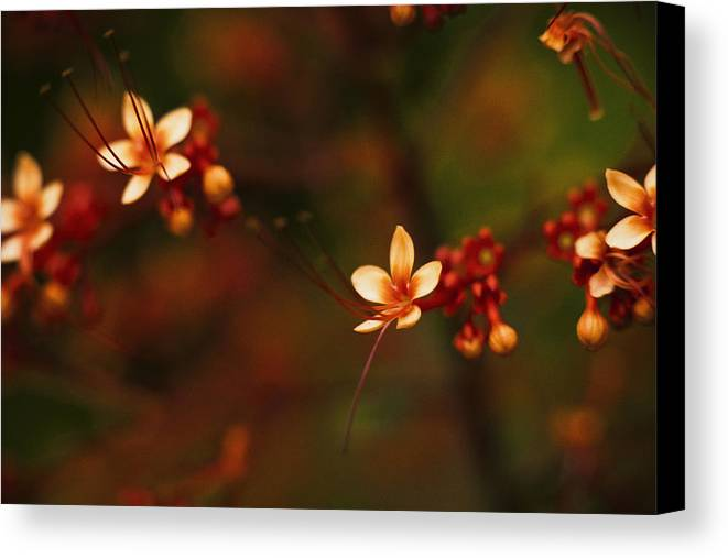 Flowers Canvas Print featuring the photograph Little Red Flowers by Bradley R Youngberg