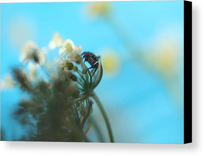 Nature Canvas Print featuring the photograph Little Spider by Rachelle Johnston
