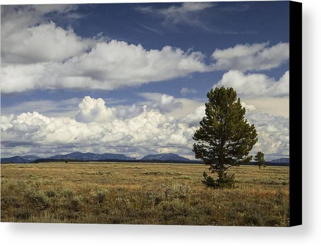 Art Canvas Print featuring the photograph Lone Tree In The Grand Teton National Park by Randall Nyhof