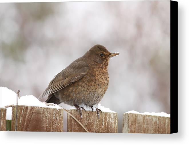 Bird Canvas Print featuring the photograph Lonely Bird by Simon Gregory