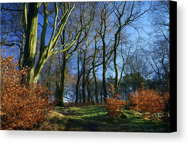 Landscape Canvas Print featuring the photograph Longshaw Woods by Darren Galpin