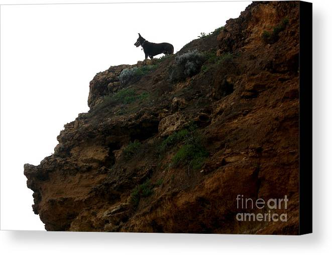 Dog Canvas Print featuring the photograph Looking Out To Sea by Amanda Holmes Tzafrir