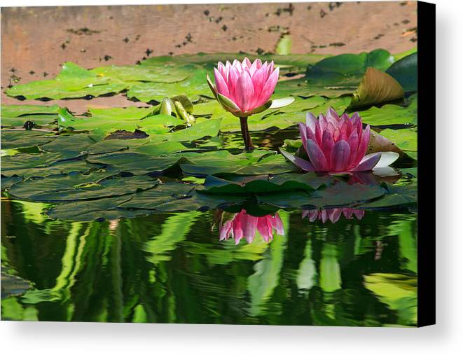 California Canvas Print featuring the photograph Lotus Flower Reflections by Beth Sargent