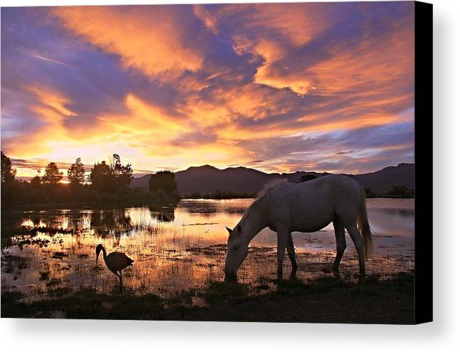 Wild Horse Canvas Print featuring the photograph Magic Of Summer by Jeanne Bencich-Nations