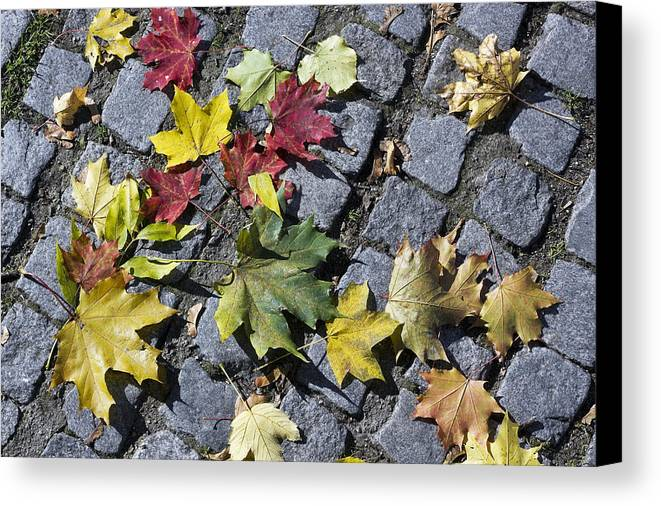 Leaf Canvas Print featuring the photograph Maple Leaves On Stones by Aleksandr Volkov
