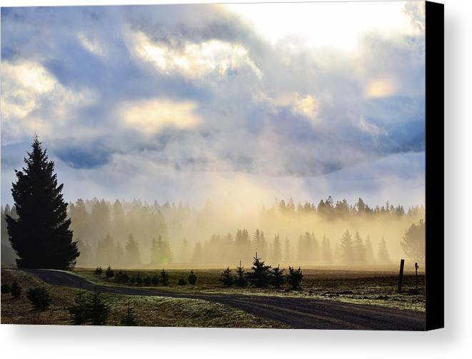 Landscape Canvas Print featuring the photograph Misty Spring Morning by Annie Pflueger