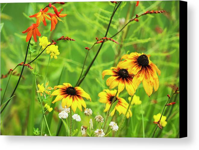 Flower Canvas Print featuring the photograph Mixed Flowers Bloom In A Garden by Robert L. Potts