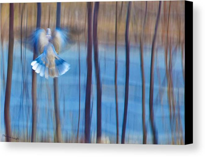 Poetry Canvas Print featuring the photograph Morning Dove by Theresa Tahara