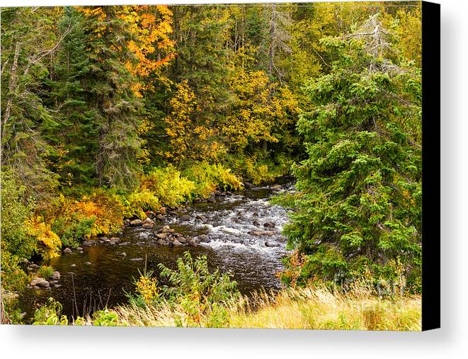Stream Canvas Print featuring the photograph Mountain Stream In Autumn by Les Palenik