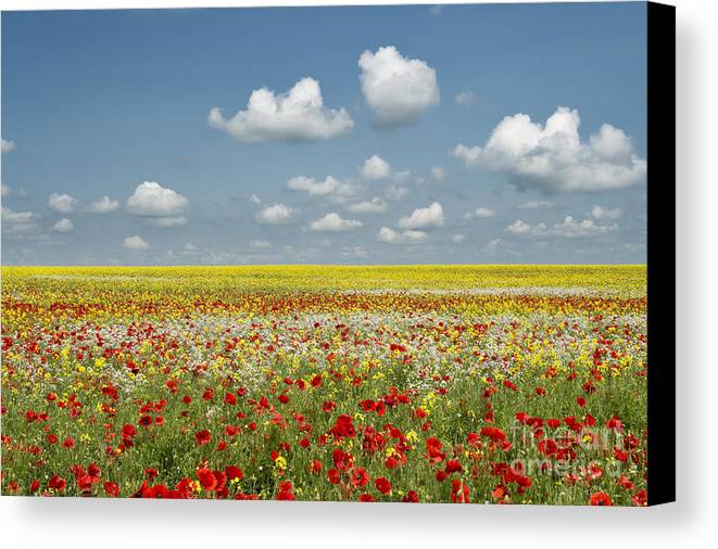 Oxfordshire Canvas Print featuring the photograph Multicoloured Field by Tim Gainey