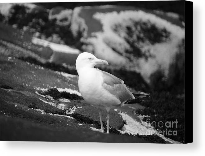 Bird Canvas Print featuring the photograph My Turf by Luke Moore