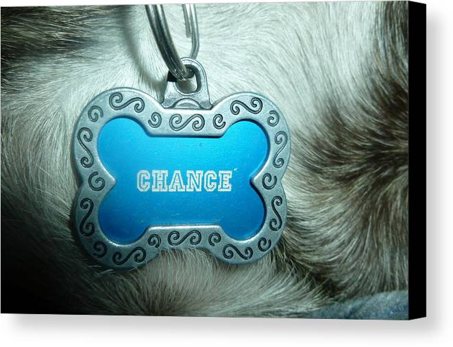 Dog Canvas Print featuring the photograph Name Tag by Montana Wilson