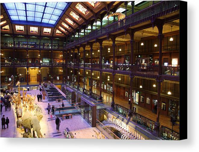 Paris Canvas Print featuring the photograph National Museum Of Natural History - Paris France - 011370 by DC Photographer
