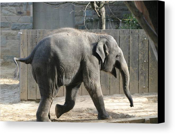 National Canvas Print featuring the photograph National Zoo - Elephant - 12126 by DC Photographer
