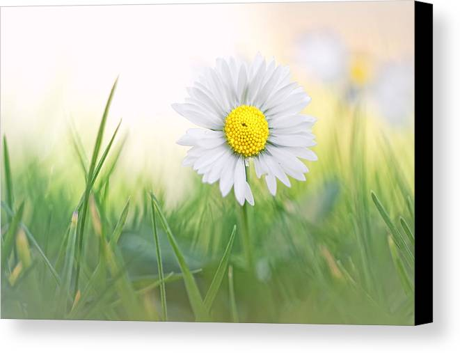 Soft Canvas Print featuring the photograph Natural Born Beauty... by Bob Daalder