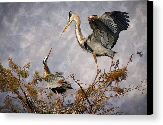 Bird Canvas Print featuring the photograph Nesting Time by Debra and Dave Vanderlaan