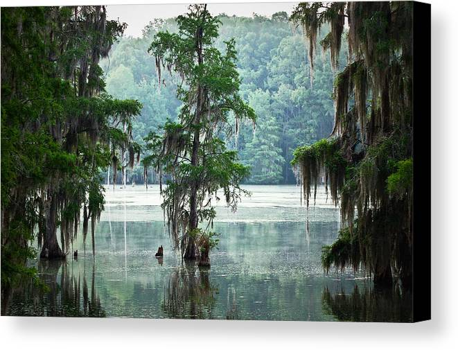 Swamp Canvas Print featuring the photograph North Florida Cypress Swamp by Rich Leighton