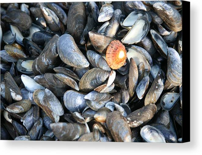 Shells Canvas Print featuring the photograph Odd Man Out by Christopher Rowlands