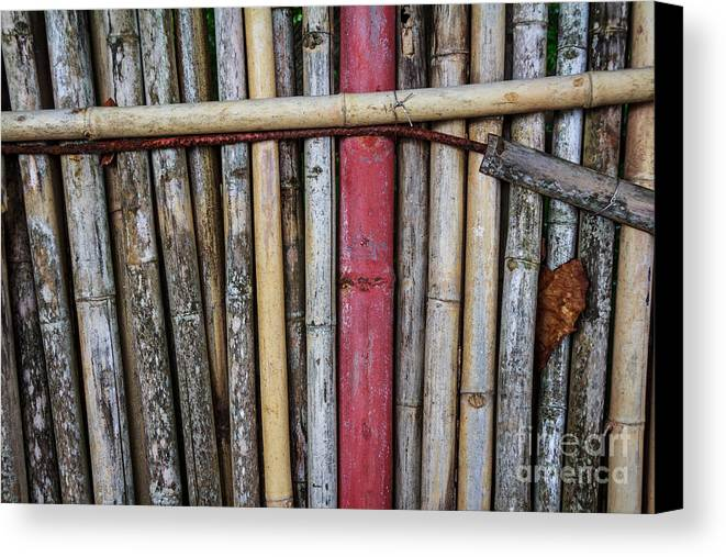 Brown Canvas Print featuring the photograph Old Bamboo Fence by Niphon Chanthana
