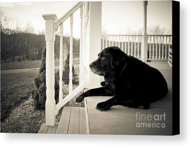 Dog Canvas Print featuring the photograph Old Dog On A Front Porch by Diane Diederich