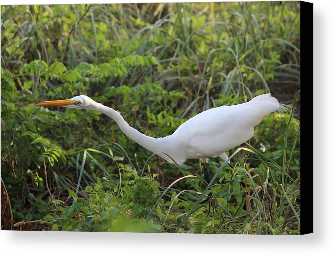 Canvas Print featuring the photograph On The Hunt by Janice Vaughn