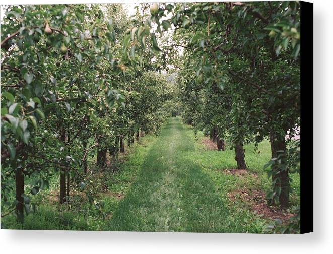 Jordan Station Canvas Print featuring the photograph On The Path by M N