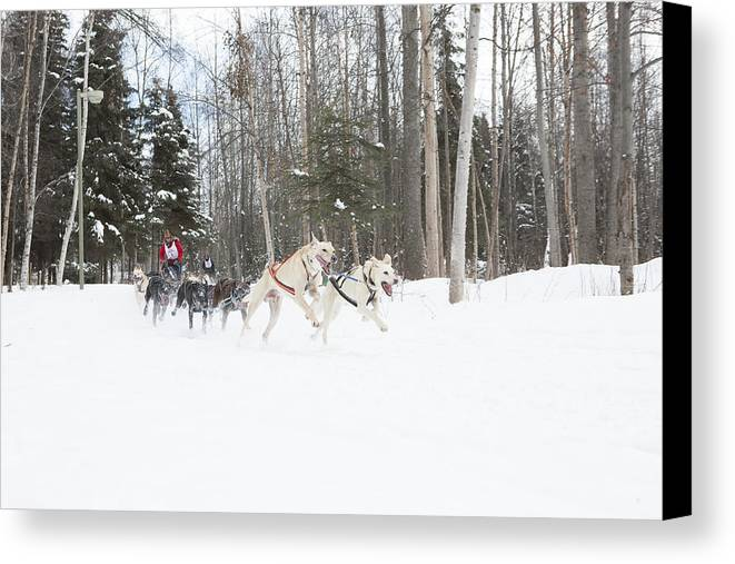 Adult Canvas Print featuring the photograph On The Race Trail by Tim Grams